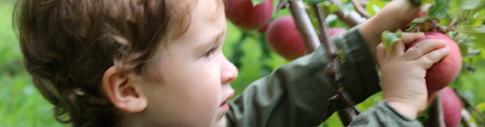 2010-11 Guide: Where To Pick Your Own Apples in NY, NJ, and CT