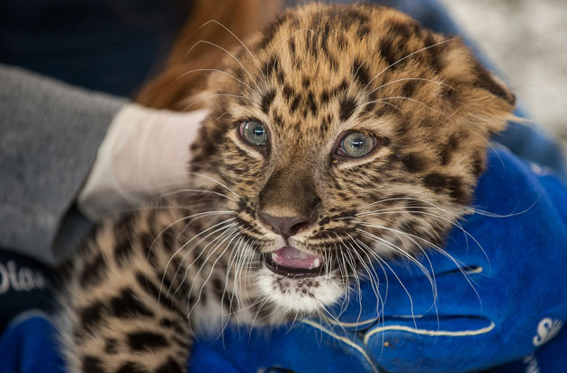 Where to See Baby Animals in the New York City Area