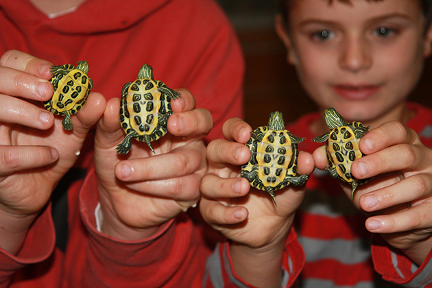 Family Activities in Fairfield County for animal and nature-loving kids