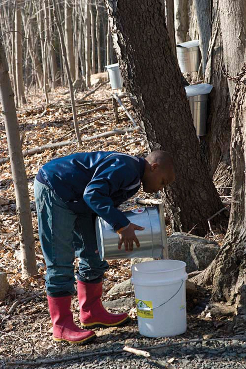 Boy Tapping Tree For Maple Sugar