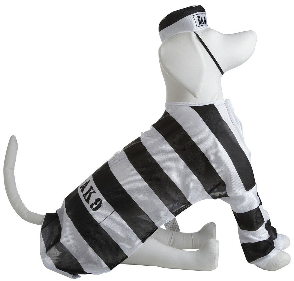 Dress Up Your Pet for Halloween: Prisoner Dog Costume