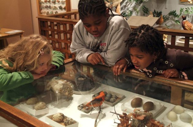 Staten Island Museum at Snug Harbor: Family Outing