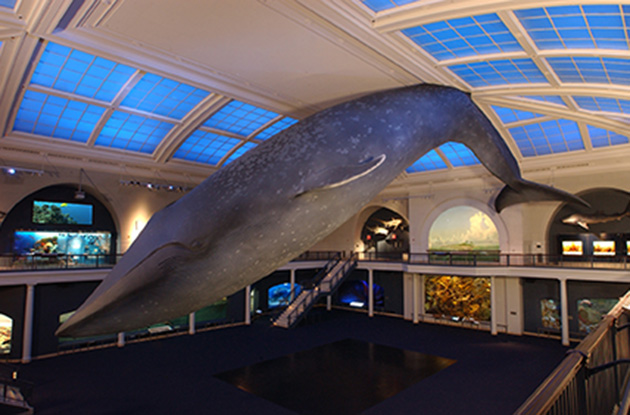Best Kept Secrets of the American Museum of Natural History