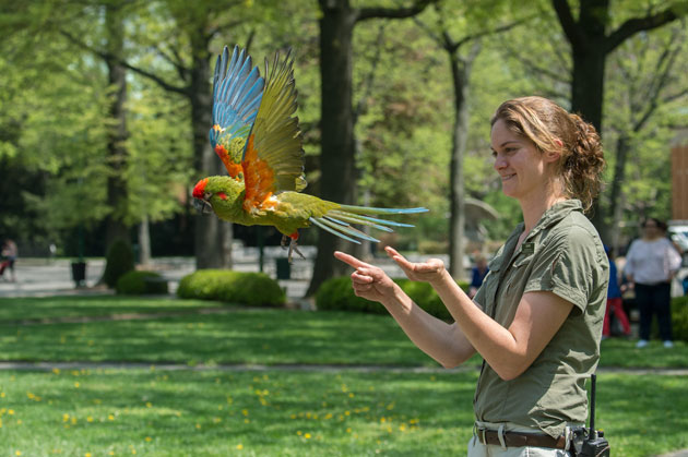 Free-Flight Bird Show Set for Seven Weekends at Bronx Zoo