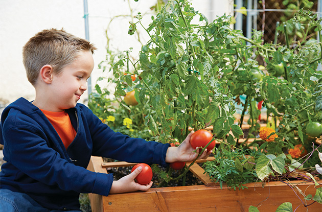 Gardening Activities for the Whole Family