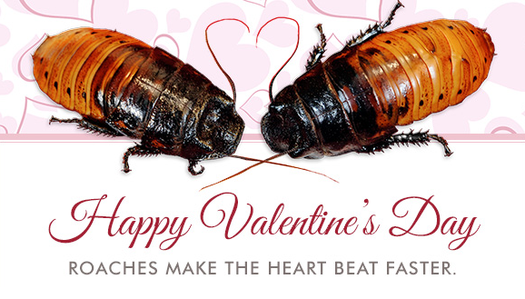 Send Your Crush a Creepy-Crawly Cockroach Valentine