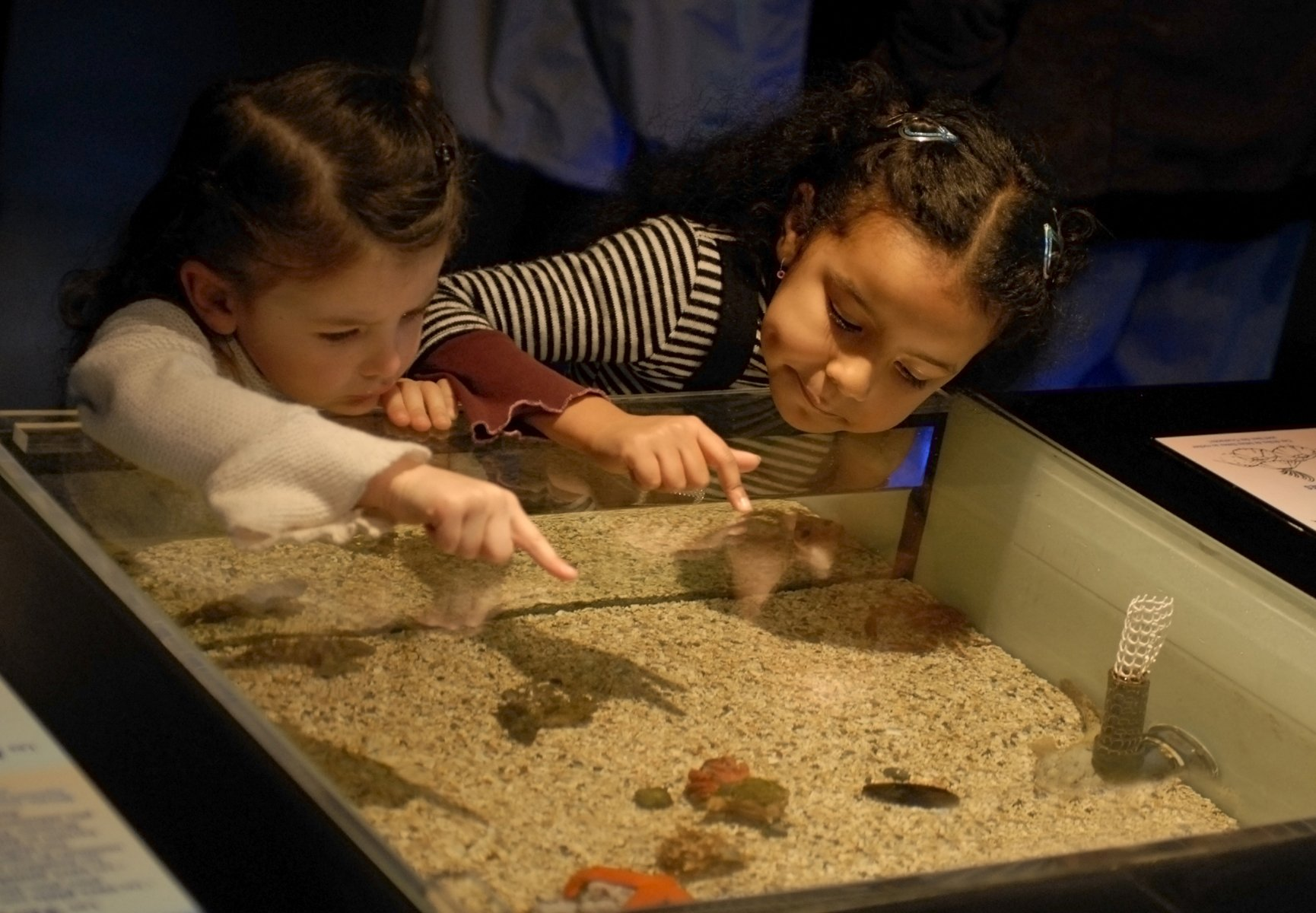 New Children's Museum Coming to the Bronx