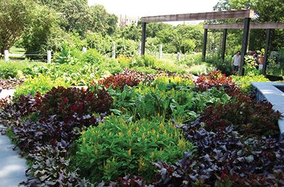 Family outing year round fun at brooklyn botanic garden for Brooklyn botanical garden tickets