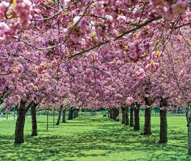Top 20 Things to Do in Spring in New York City