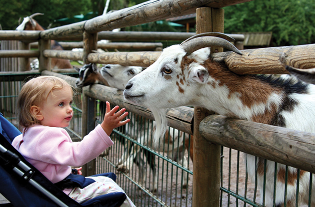 April Family Events in Suffolk for Kids who Love Animals