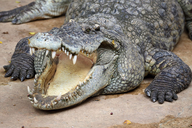 American Museum of Natural History Announces New Crocodile Exhibit
