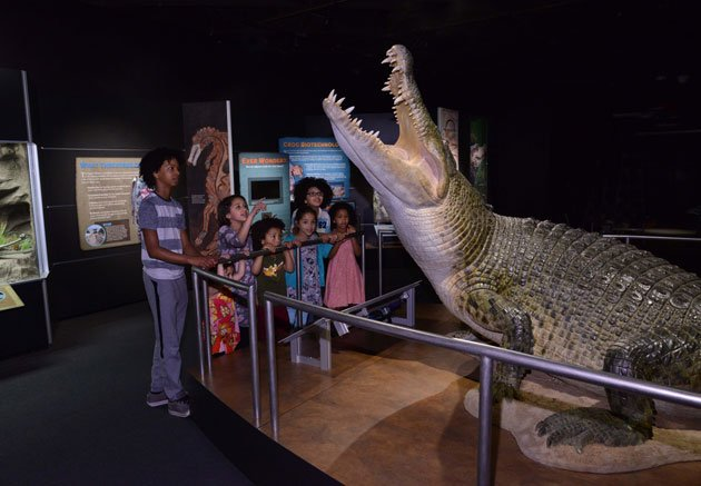 New Exhibit on Crocs Opens at the American Museum of Natural History