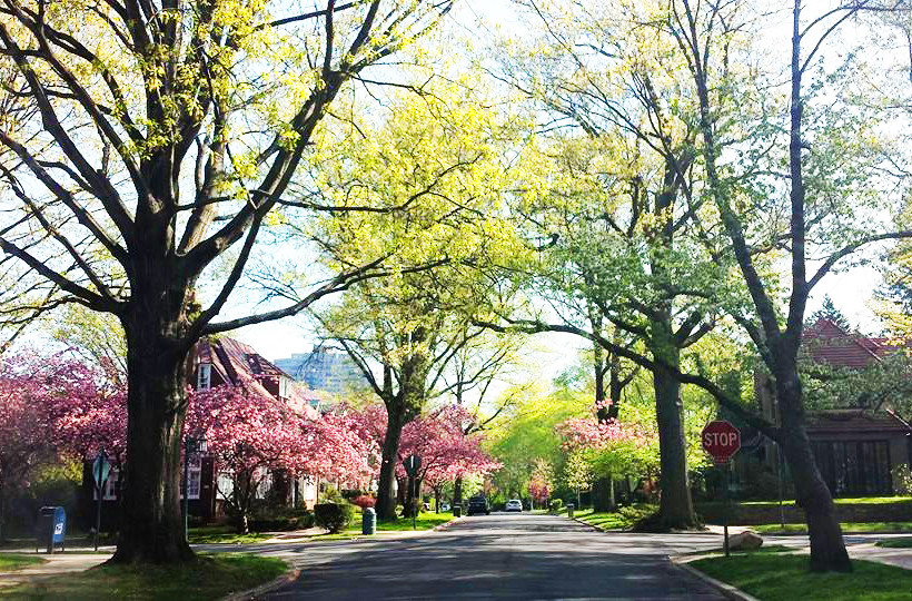 5 Reasons We Love Forest Hills