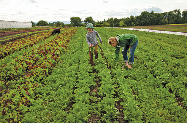 Community Supported Agriculture: Fresh Produce from the Farm to Your Table