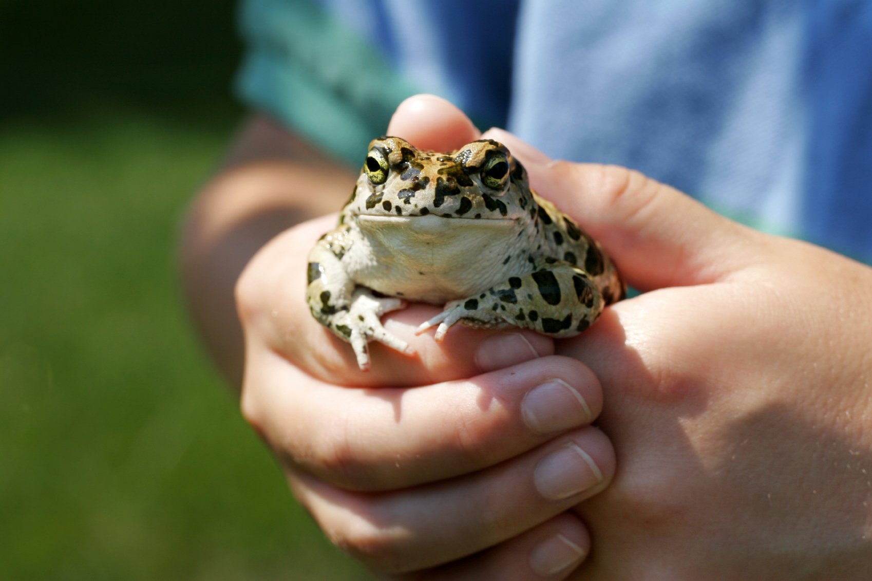 Mystic Aquarium Announces New Frogs! Exhibit