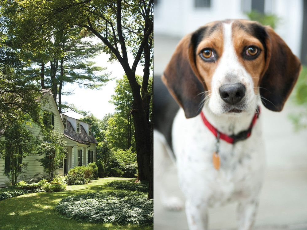 Left: The front of Pentecost's house, with the original saltbox to the left of the front door and the living room addition from 1965 to the right. Right: The pair's beagle, Baby.