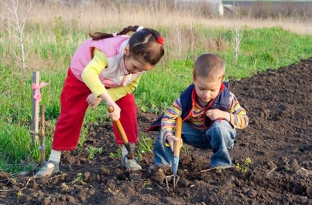 Seeds of Change Grant to Award $300,000 to School and Community Gardens