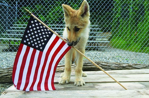 Memorial Day Activities for Kids in Westchester and Rockland Counties