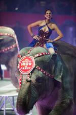 Three Ring Schoolhouse: Raising Kids In The Circus