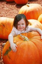 2013 Fall Fairs and Festivals in New York City