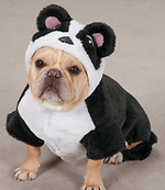 Enter Your Pet in a Halloween Costume Contest