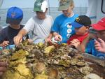 Sea Explorers Marine Camp Now Offers Camp for Ages 10-14
