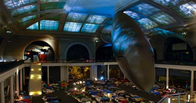 Night at the Museum: Adult Sleepovers at AMNH