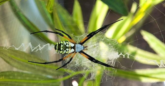 Spiders Alive! Returns to AMNH