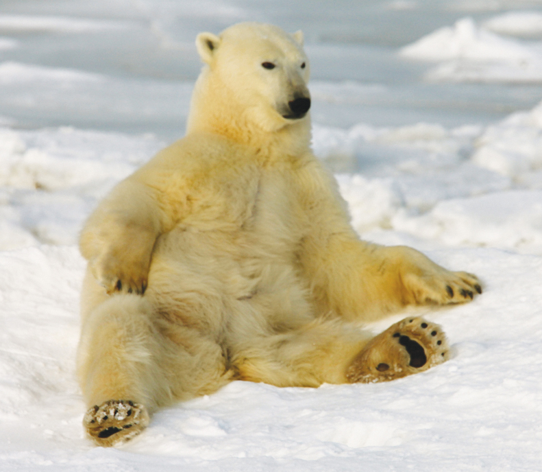 polar bear in To the Arctic movie