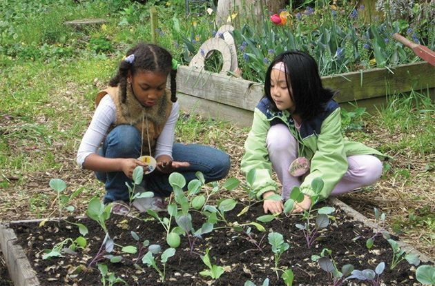 Tips for a Successful and Enjoyable Gardening Experience