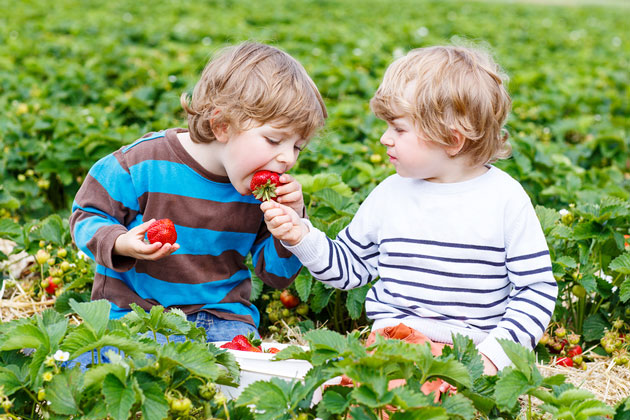 kids picking strawberries