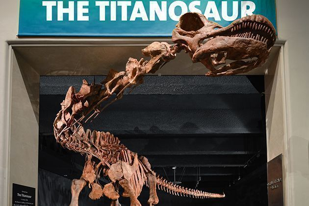 The American Museum of Natural History Debuts a New Dinosaur, the Titanosaur