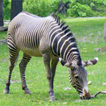 The Great Outdoors, New York City Style - The City's Top Zoos, Aquariums, and Gardens