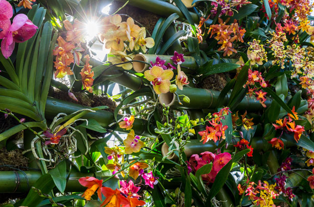 Check Out The Orchid Show At New York Botanical Garden