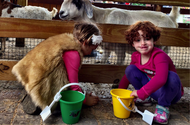 White Post Farms in Melville: Pony Rides, Petting Zoo, and Much More