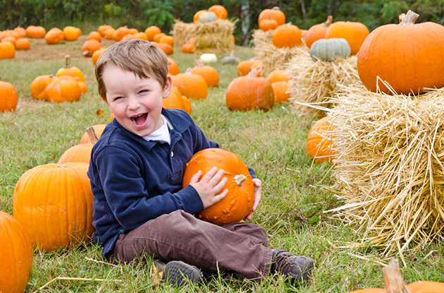 Pumpkin Picking in the New York Metro Area