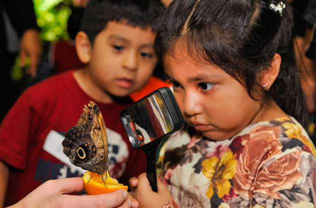 Walk Among Live Butterflies at the American Museum of Natural History