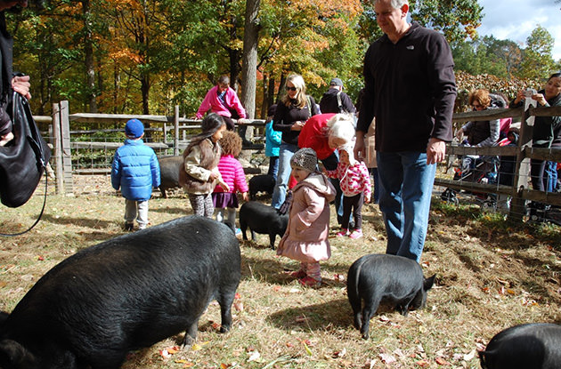 Weekend Fun in Westchester, Rockland, and Fairfield Counties