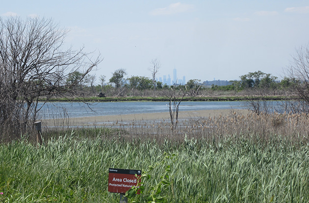 Spend the Day at Jamaica Bay Wildlife Refuge