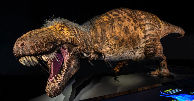 He's the Lizard King: New T. Rex Exhibit Kicks Off AMNH's 150th Anniversary