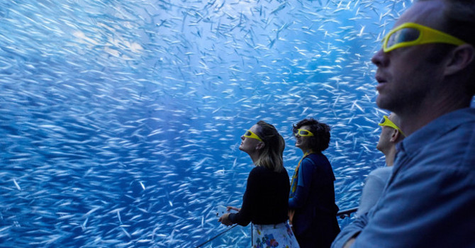 Save on National Geographic Encounter: Ocean Odyssey with City Guide's Coupon Code