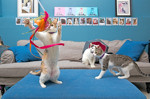 Where to Hang with Adoptable Cats in NYC
