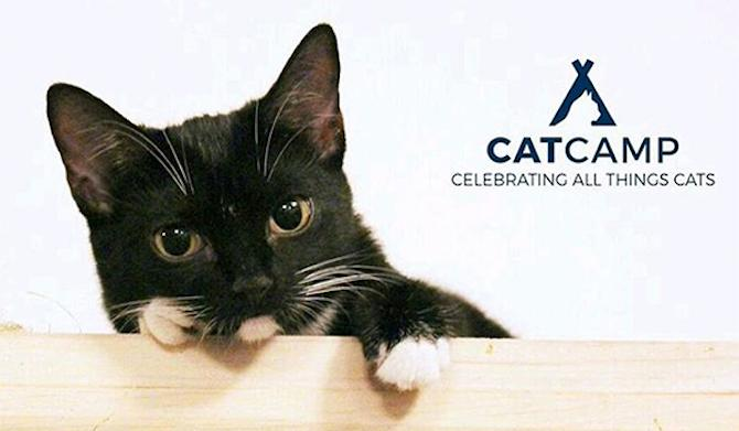 Cat People: NYC Hosts Its First Ever Cat Conference