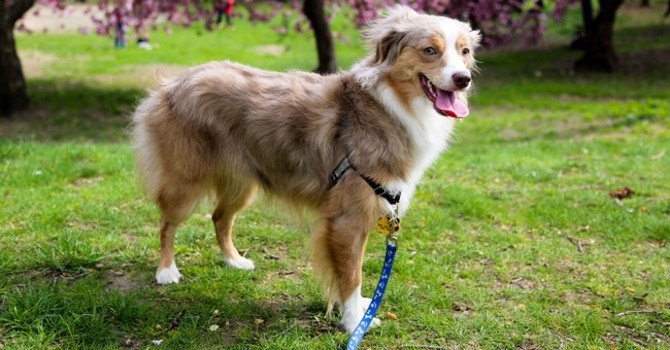 Best Places to Walk a Dog in NYC