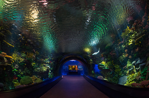 New Shark Exhibit to Open at the Wildlife Conservation Society's New York Aquarium