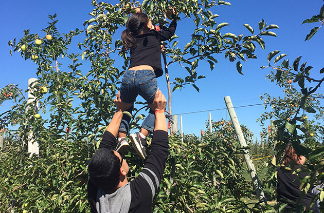 father lifting young daughter to pick apples