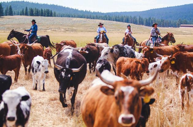 Montana's Resort at Paws Up Offers a Country-Style Family Vacation