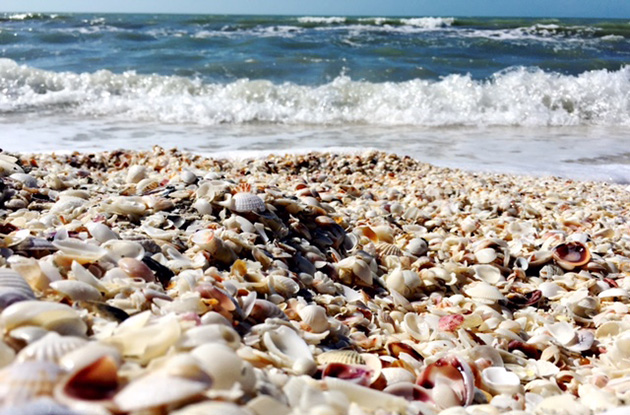 Fort Myers, Sanibel, and Captiva, Florida: A Paradise of Sand Dollars, Dolphins, and Key Lime Pie