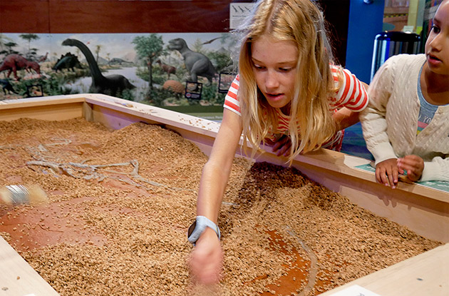 Stepping Stones Museum's New Dinosaur Exhibit Encourages Imagination