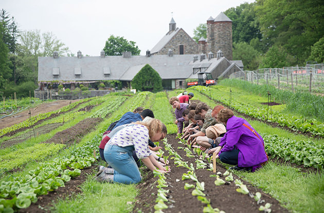 Family-Friendly Educational Farms in Westchester